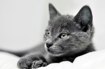 kitten in black and white