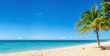 Amazing sandy beach with coconut palm tree and blue sky, Caribbe - 80789866