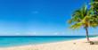 Leinwanddruck Bild - Amazing sandy beach with coconut palm tree and blue sky, Caribbe