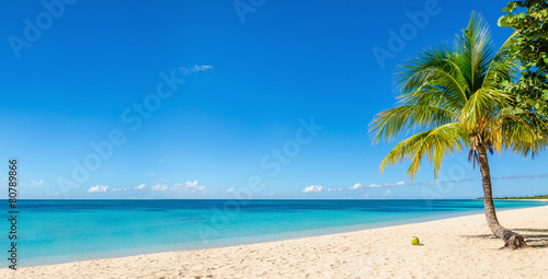 Poster Eiland Amazing sandy beach with coconut palm tree and blue sky, Caribbe