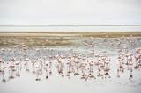 Fenicotteri rosa, Walvis Bay, Africa