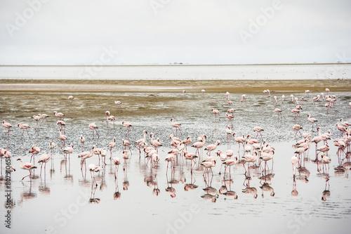 Foto op Aluminium Flamingo Fenicotteri rosa, Walvis Bay, Africa