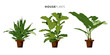 Set of three houseplants with brown plant pot. Vector design. - 80791457