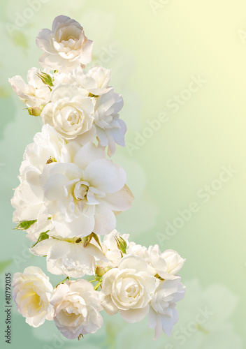 Plexiglas Rozen Beautiful vertical frame with a bouquet of white roses
