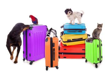 Tiere mit Reisekoffern