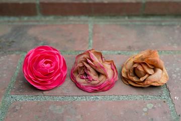 美しい花と萎れた花