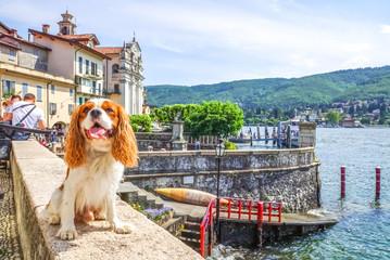 Hund auf Reisen, Italien