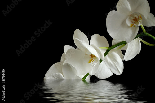 Foto op Canvas Orchidee orchid flower reflexion