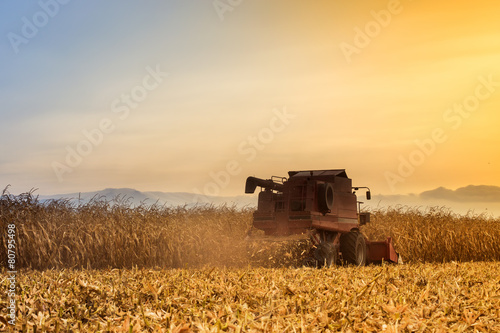 Deurstickers Weide, Moeras Red harvester working on corn field