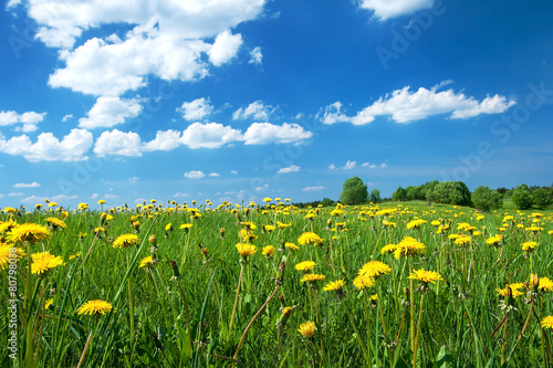 Panel Szklany Field with dandelions and blue sky
