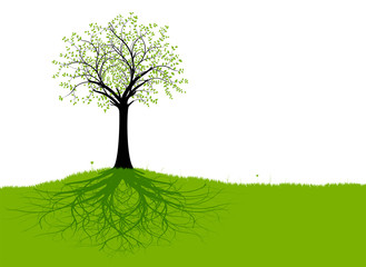 Vector Tree and Roots