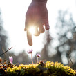 Hand of a man above blue flower back lit by the sun