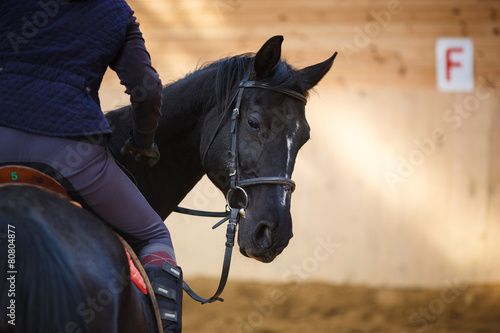 Fototapeta Rider on the horse