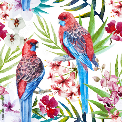 Rosella bird pattern - 80809478