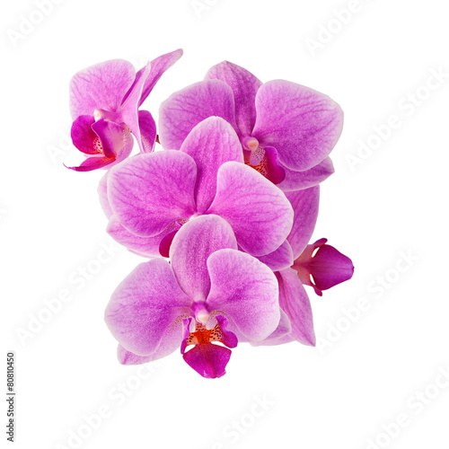 Foto op Aluminium Orchidee pink orchid flowers isolated on white
