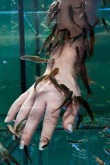 Doktorfische knabbern Hautschuppen