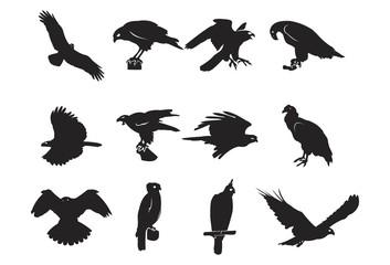 Silhouette of Eagle - Hawk