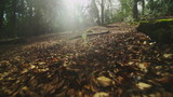 Camera FPV floating over leafy ground in a forest poster