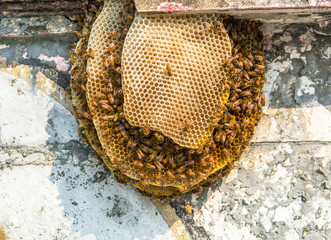 Bee and Honeycomb Community in the City