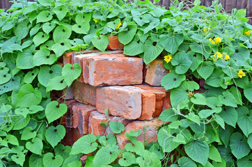 Stack of old red clay brick in plant