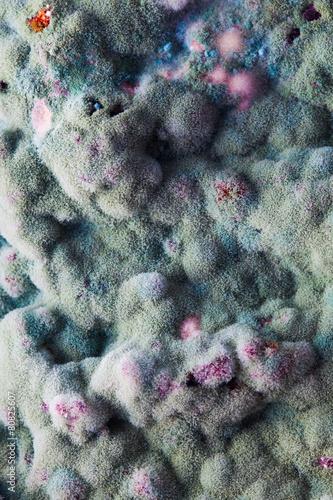 macro of mold relief - 80825607