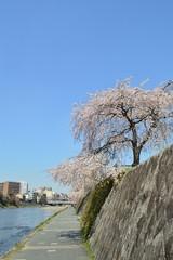 京都鴨川の街並み