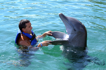 dolphin swim with man