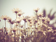 flowers with filter effect retro vintage style