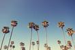 Leinwanddruck Bild - Palm Trees in Retro Style