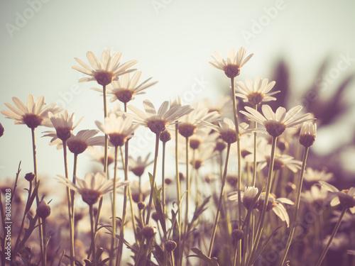 Papiers peints Retro flowers with filter effect retro vintage style