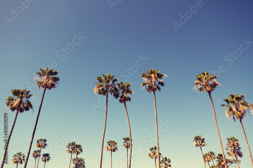 Poster Bomen Palm Trees in Retro Style
