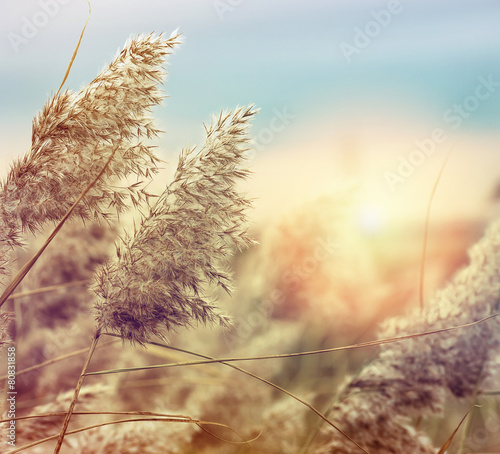 Reed in the quiet evening on a sunset. Retro style.