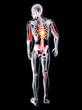 Anatomy - Back Pain.