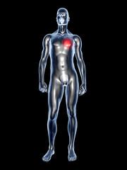 Heart Ache - Anatomy