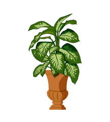 House plant isolated on white background and big leaves.