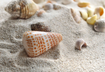 coquillage dans sable