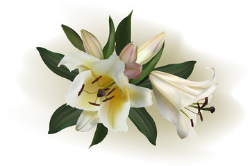 white lily flowers on light background