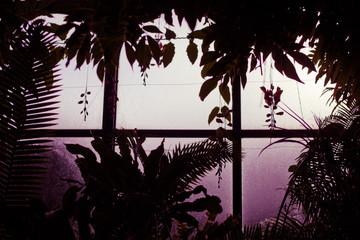 night branch plant window fog