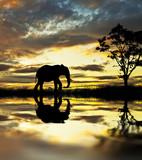 słoń spacerujący po jeziorze