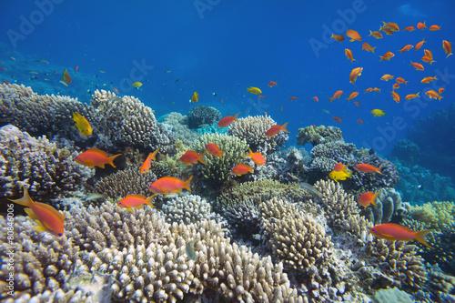 Tropical fish and Hard corals - 80846006