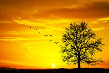 silueta de un arbol al amanecer