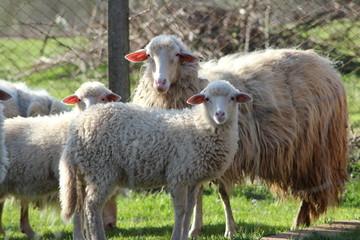 agnelli con la mamma