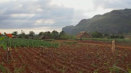 Tabakplantage Kuba, vinales