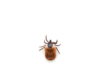 health danger - disease-carrier ticks