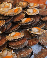 Large Group of Scallops at the Fish market in Paris