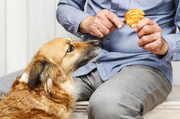Friends forever: man feeding his lovely dog