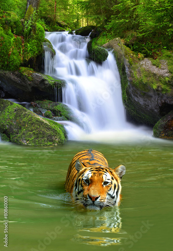 Canvas Luipaard Siberian Tiger in water