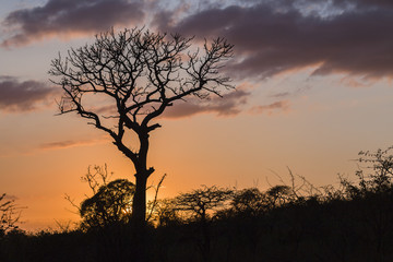 Wilderness Trees Sunrise Landscape