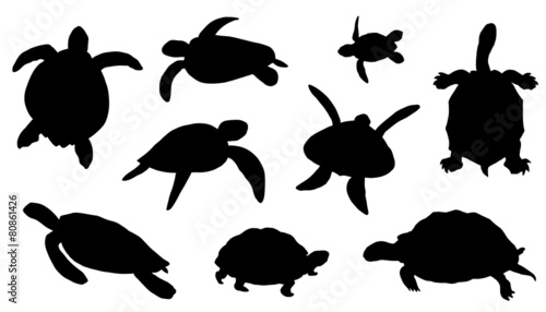 turtle silhouettes - 80861426