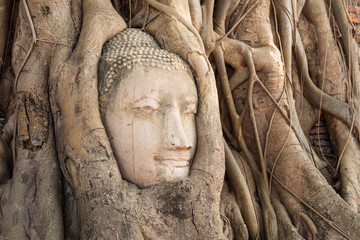 head of sandstone buddha in the tree roots at wat mahathat templ